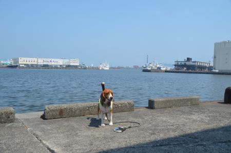 20130712清水魚市場 河岸の市13