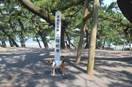 20130712三保の松原04