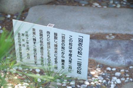20130712三保の松原19