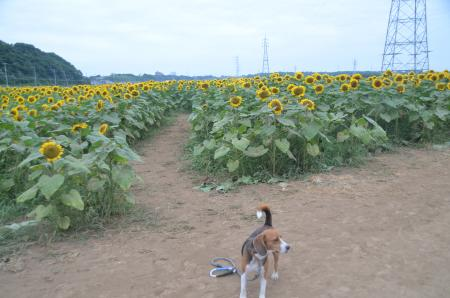 20130721佐倉ふるさと公園06