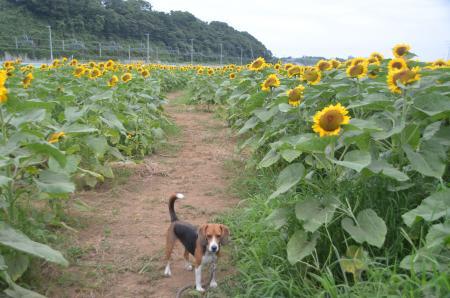 20130721佐倉ふるさと公園05
