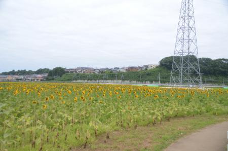 20130721佐倉ふるさと公園02