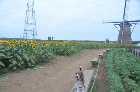 20130721佐倉ふるさと公園07