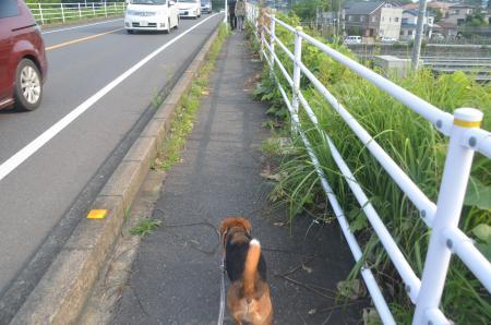 20130728妙見神社05