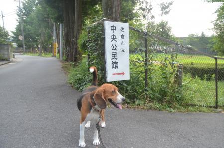 20130728妙見神社03
