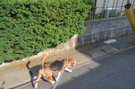 20130728妙見神社01
