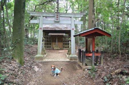 20130802鳥見神社・白井平塚09