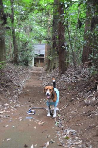 20130802鳥見神社・白井平塚15