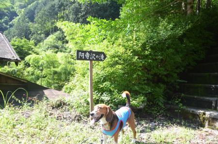 20130807阿寺沢の滝07