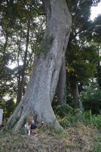 20130822鳥見神社・印西小倉09