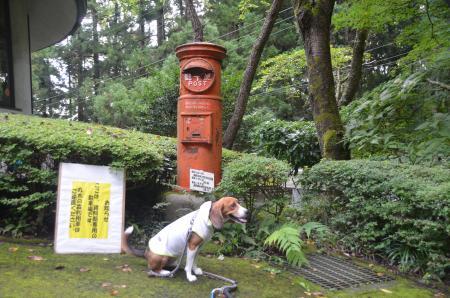 20130906丸太の森03