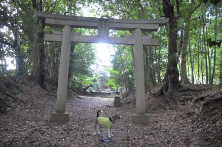 20130930鳥見神社 白井富ヶ谷03