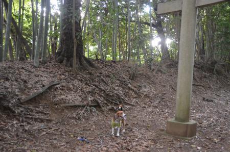 20130930鳥見神社 白井富ヶ谷10