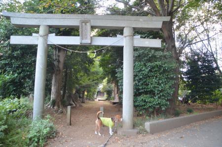 20130930鳥見神社 白井富塚04