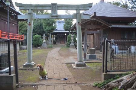 20130930鳥見神社 白井富塚11
