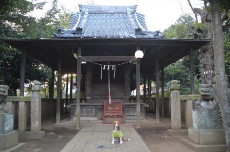 20130930鳥見神社 白井富塚13