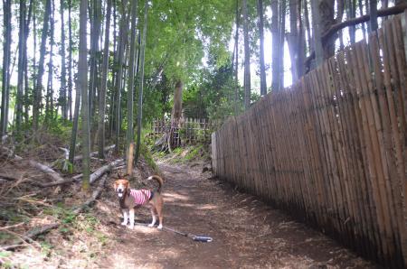 20131007鳥見神社 白井・白井08