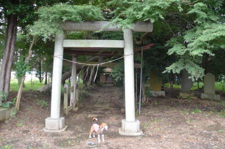 20131007鳥見神社 白井・名内02