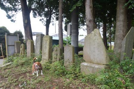 20131007鳥見神社 白井・名内09
