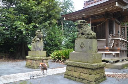20131007鳥見神社 白井・神々廻08