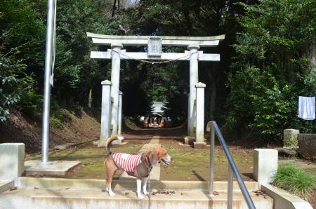 20131007宗像神社 印西・鎌苅02