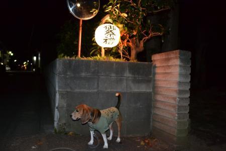 20131011佐倉秋祭り01