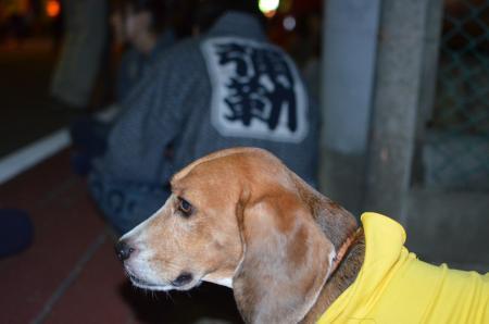 20131012佐倉秋祭り 第2夜15