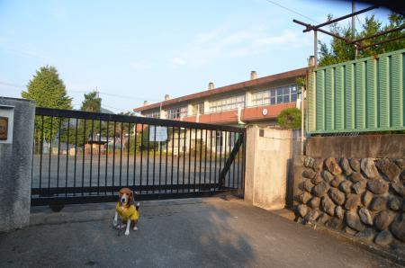 0131101吉野小学校08