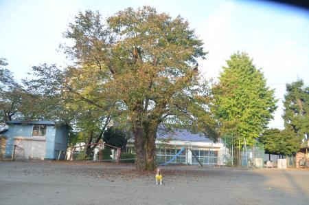0131101吉野小学校17