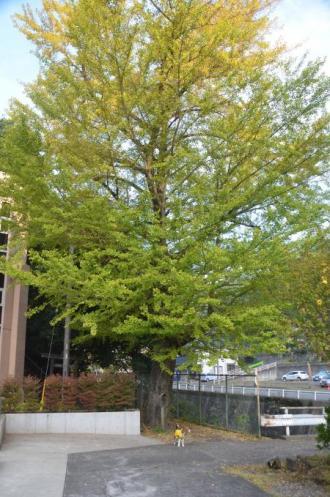 20131101沢井小学校16