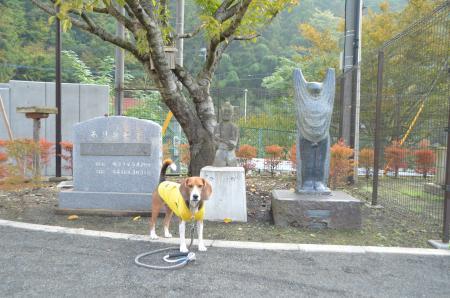 20131101沢井小学校13