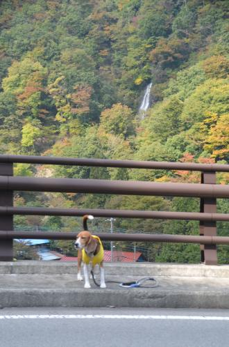 20131101七滝05
