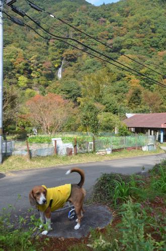 20131101七滝10