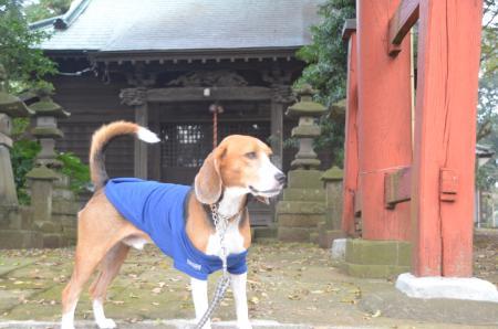 20131102宗像神社 瀬戸04
