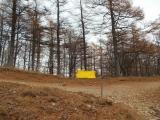 林の中のツェルト