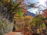 林道から見た紅葉1