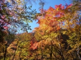 林道から見た紅葉2