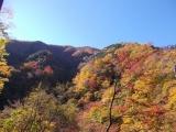 林道から見た紅葉3