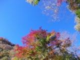 林道から見た紅葉4