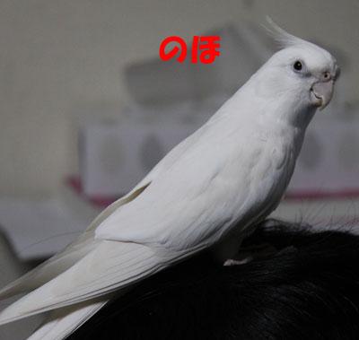8_アンジュ