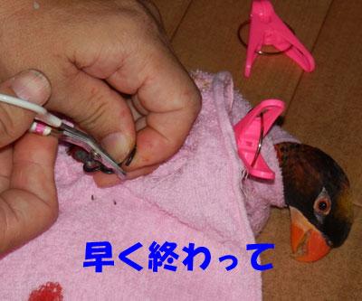 6_ピンナ爪切り
