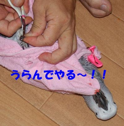 8_爪切り