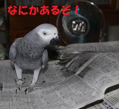 1_カンナ捜索