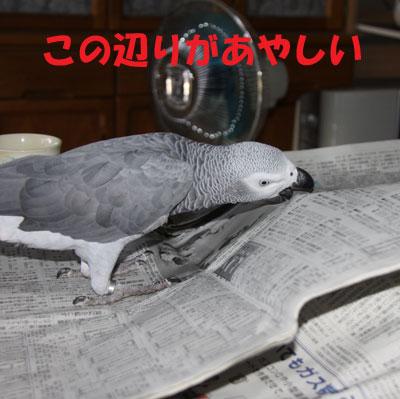 2_カンナ破壊