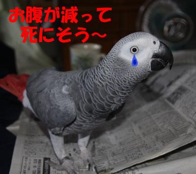 4_カンナ涙