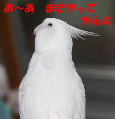 6_アンジュ