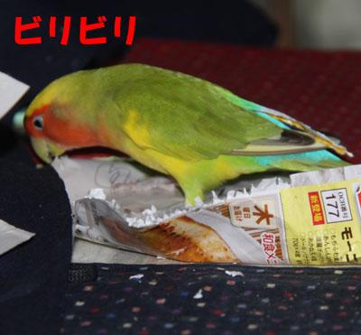 5_リコ1