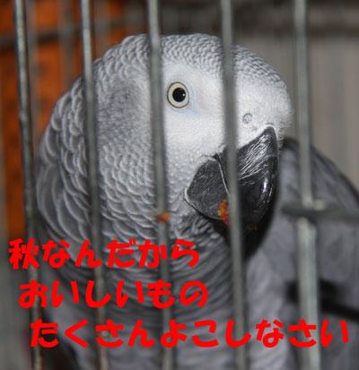11_カンナ