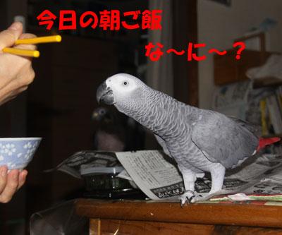 2_朝食1