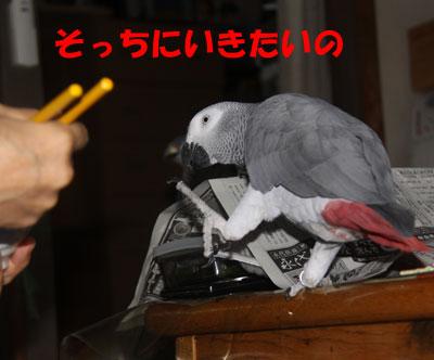 4_朝食3